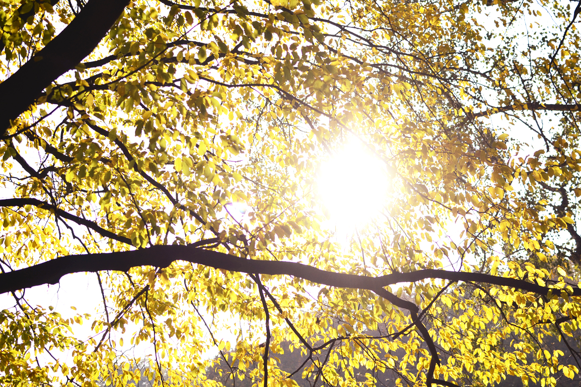 light sunlight autumn